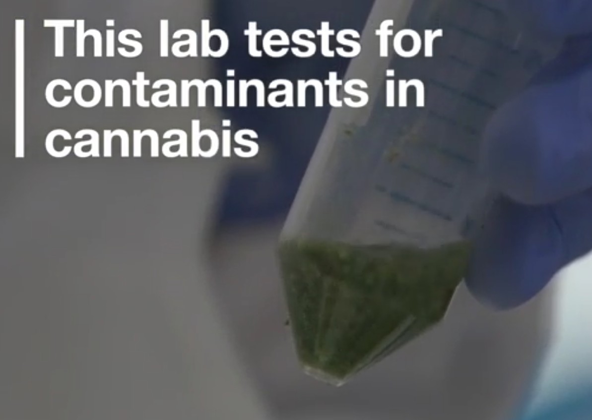 Vice explores how ProVerde Labs tests marijuana and hemp for contaminants